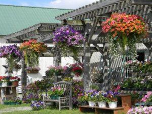 Breezy Acres Primitive Barn, St. Albans, VT