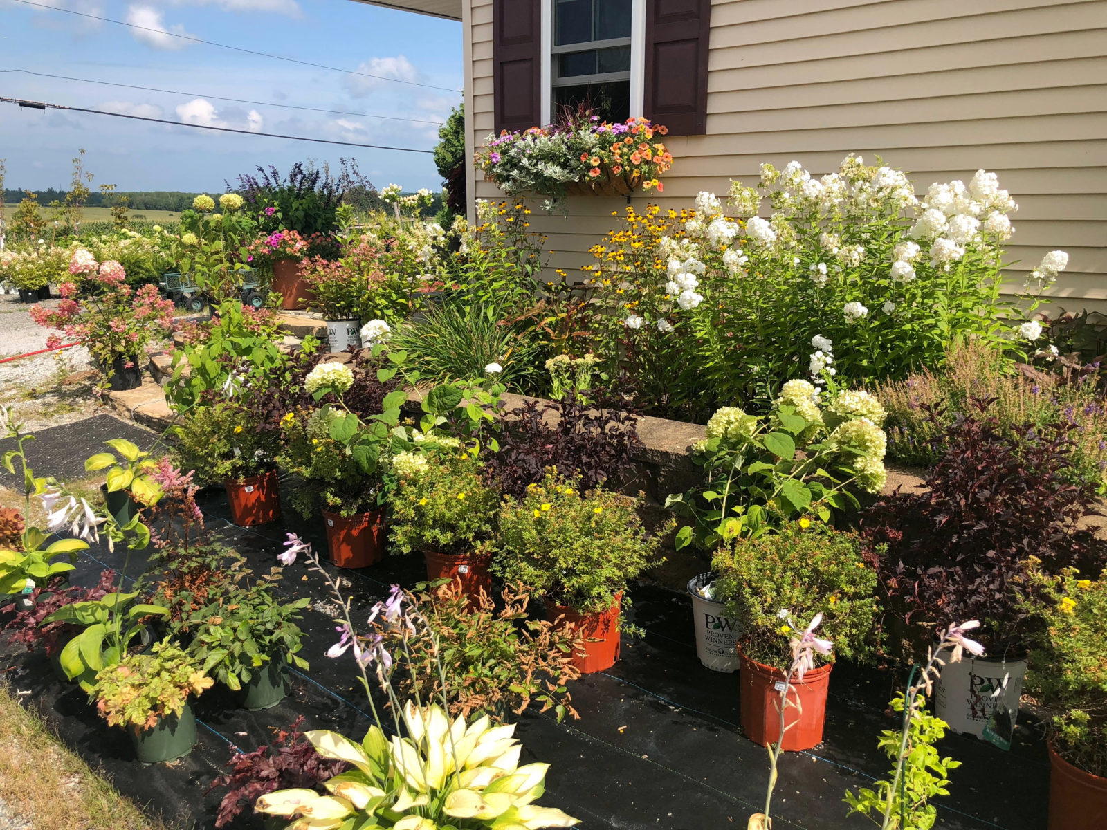 Summer Plant Clearance Sale