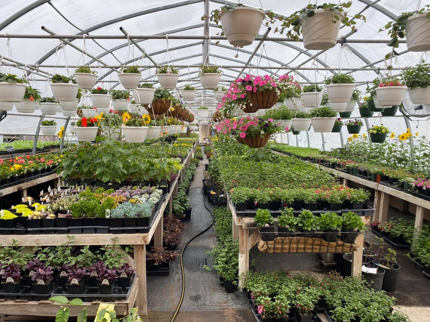 Greenhouses are open!